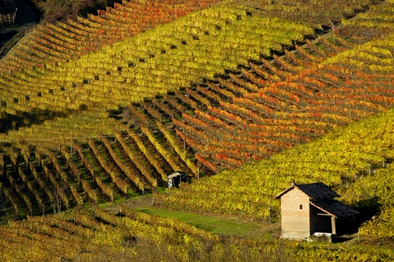 Ciabot nelle vigne d'autunno